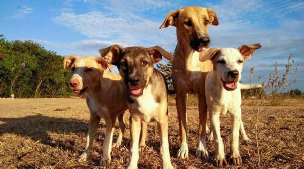 projekt-hunde-freiwilligendienst-trujillo