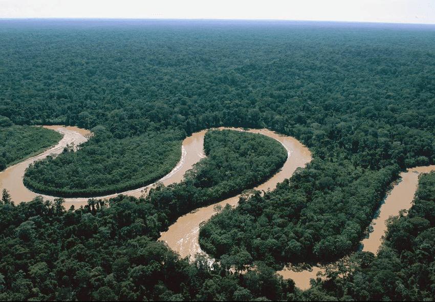amazonas-regenwald-biodiversitaet