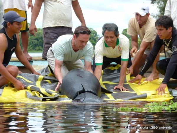 seekuh-amazonas-tierprojekt-rettungszentrum-freilassung