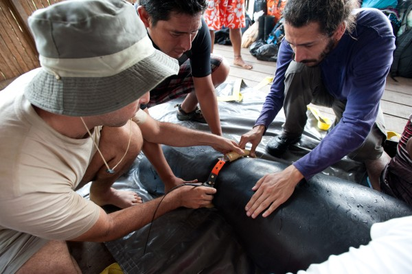 wildlife-amazonas-tierprojekt-rettungszentrum-peru
